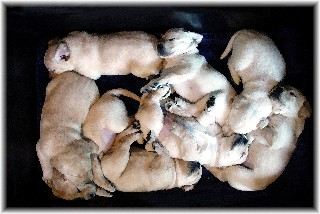 Pile of pups at 4 weeks old