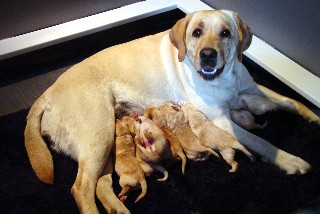 Winter and her pups